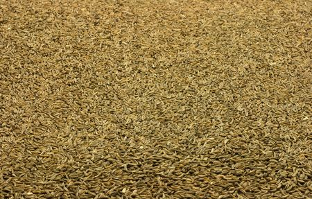 caraway: Caraway seed pattern Stock Photo