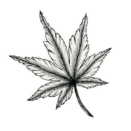 cannabis black ink leaf drawing isolated on white, line art drawing of a leaf, hand drawn botanical illustration, black leaf sketch