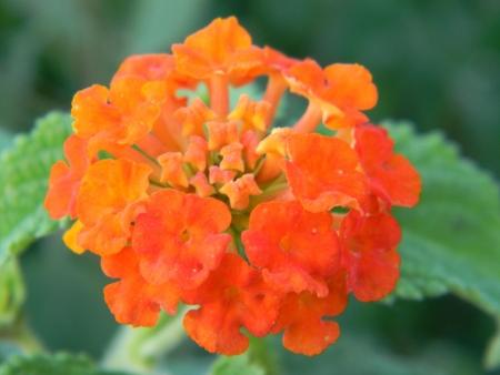 Fiore arancio  Stock Photo