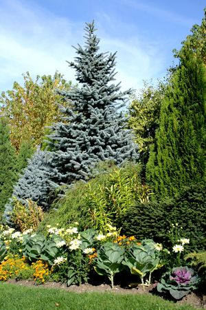Coniferous garden with flowers and decorative cabbage Stock Photo