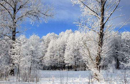 rural scenes: Frozen forest in sun day