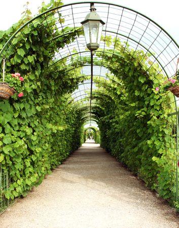 Vine arbor tunnel in garden Rundale Latvia Stock Photo