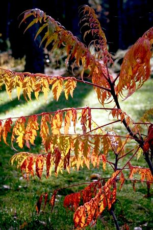 autumn branch on a background calling sun Stock Photo - 4632140