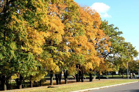 Autumn city street Stock Photo