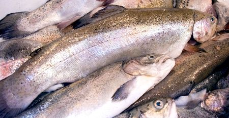 Fresh rainbow trout  in the early morning at fish market photo