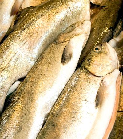 Fresh rainbow trout  at fish market photo