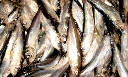 Heaps of freshly caught fishes Stock Photo - 5044100