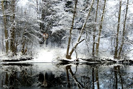 Reflection of the snow-bound forest is in a lake photo
