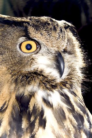 Portrait of wise owl by a large plan photo