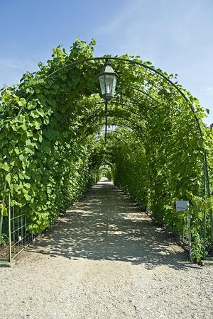 rundale: Vine galleria pergolato in giardino Rundale, Lettonia Archivio Fotografico