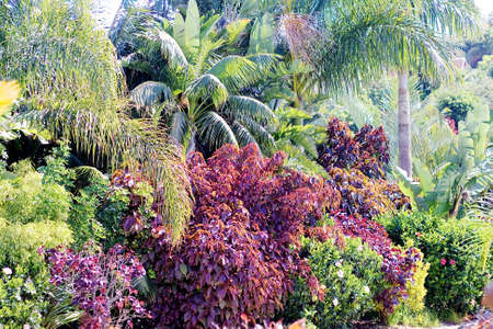 Tropical plants on territory of Siam waterpark, Tenerife, Canary Islands photo