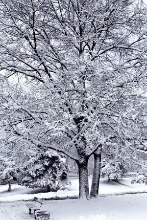 deep freeze: Hermoso paisaje de invierno con �rboles cubiertos de nieve en el parque de la ciudad