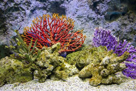 paragon: Red corals in aquarium at Siam Paragon is a shopping mall, Bangkok, Thailand