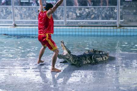 jaws: THAILAND, BANGKOK, MARCH, 26, 2015 - Traditional for Thailand Show of crocodiles.The trainer put his head into the jaws of a crocodile in Million Years Stone Park Pattaya Crocodile Farm, Thailand