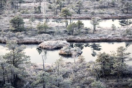 8 year old: Sunrise on mystical 8,000 year old Kemeri swamp in the morning mist. Kemeri, Latvia