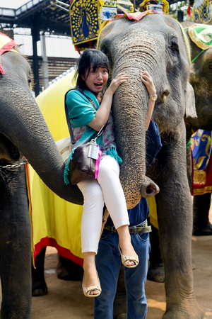 show garden: THAILAND, PATTAYA, MARCH, 28, 2015 - On the Elephants show frightened girl lift at elephants trunk. The famous elephant show in Nong Nooch tropical garden in Pattaya, Thailand.