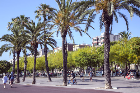 aculeata: SPAIN, BARCELONA, JUNE, 28, 2015 - People walking at the promenade planted with flowering trees Ratama or Parkinsonia aculeata by port Olympic in Barcelona, Spain