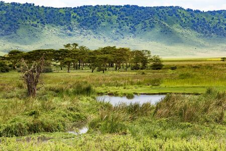 Ngorongoro Crater Conservation Area with Umbrella acacias Albizia and a small lake in Tanzania. East africa Imagens