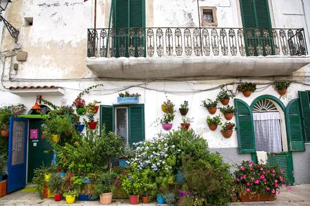 picturesque street with old small houses decorated with colorful flowered pot in Bari Old Town, on the Adriatic coast, Italy