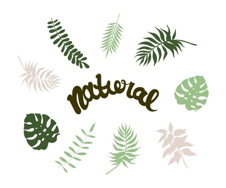 vector sketchy illustration of some palm leaves augmented with Natural sign.