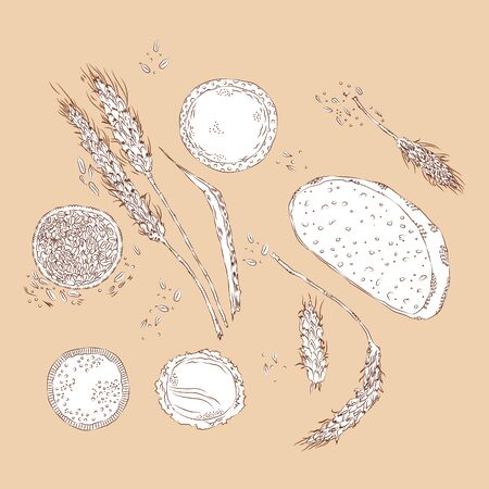 vector hand drawn sketchy set of wheat spikes, seeds and products isolated on millennial pink background. Illustration for social media, food,  catering, design, rustic themes. Textile and printed pro  イラスト・ベクター素材