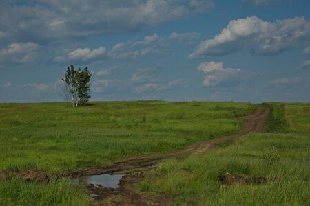 Country road in the field of the central strip of Russia. Stockfoto - 150297926
