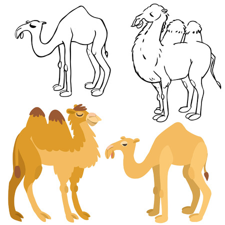 zoo dry: cartoon camels set. Illustration of isolated bactrian and dromedary camels on white background