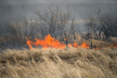 Nature disaster, environmental problem of the air pollution. Fire in a forest Stock Photo