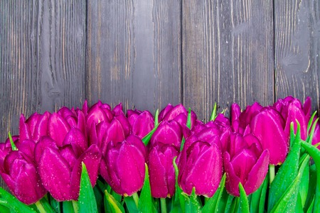 Womens Day copy space with bright pink tulips on a black wooden background , textures Banco de Imagens