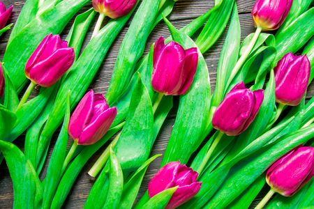 Floral pattern made of pink tulip, green leaves, branches on black background.