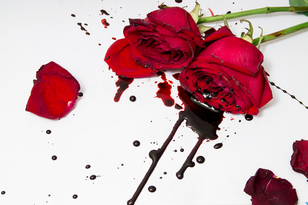 Dramatic scene with dark red roses with blood drops on a white background. Gothic flat lay. Top view