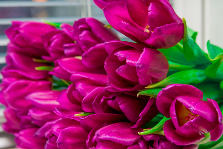 a bunch of Bright pink tulips with green leaves, macro Imagens