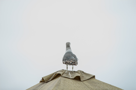 a seagulls sitting on a roof with a gray sky background