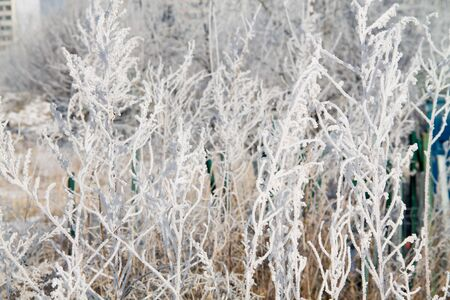 frosted trees and grass and heavy snow in a winter park as in fairy tales