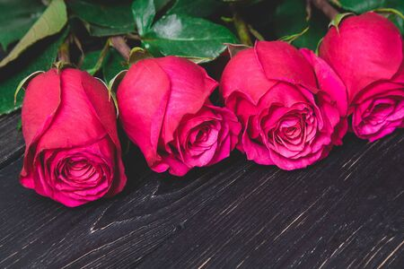 fresh dark red roses close up with dark green leaves lying on a black wooden background with copy space