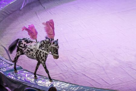 a Copy space with white and black horses on fair pink and lilac arena background in a circus