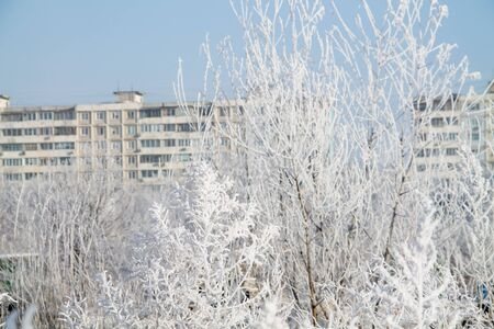 frosted trees and grass and heavy snow in a winter park as in fairy tales with blocks-of-flats on the background Imagens