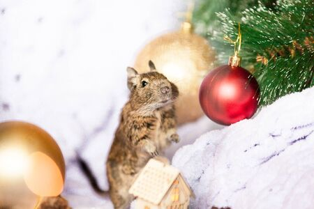 Symbol of 2020, the rat mouse sits near a Christmas tree branch among Christmas decorations Imagens