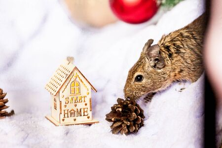 a Symbol of 2020, the rat mouse sits among Christmas decorations