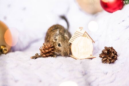 a Symbol of 2020, the rat mouse sits near a Christmas tree branch among Christmas decorations Imagens