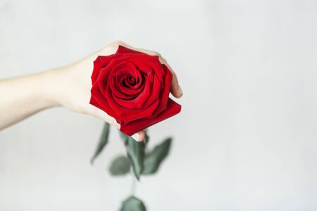 copy space with woman hand holding a red rose on a white concrete background