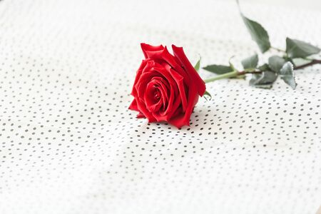 Red rose on white background as a symbol of love on valentine's Day