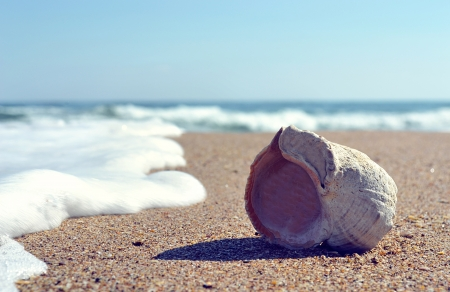 downhearted: shell photo Stock Photo