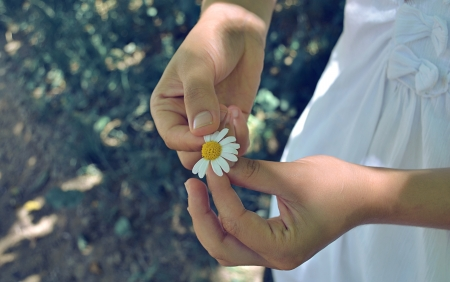 fortune telling: hands with flower
