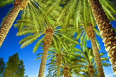 Palm Trees Lighting Las Vegas street Stock Photo