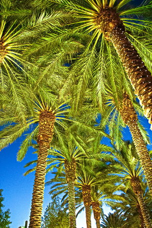 palm trees lighting las vegas street stock photo picture and