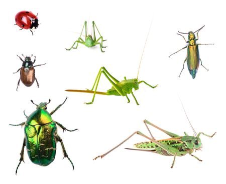 Bugs collection isolated on white background Stock Photo - 7995638