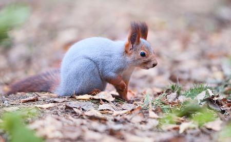 Curious squirrel photo