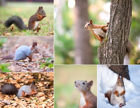 Squirrel  season specific Stock Photo - 13507175