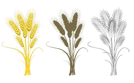 wheat illustration: Bouquet di grano isolato su bianco Vettoriali